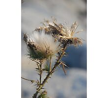 thorny crown Photographic Print