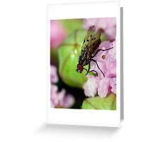 Small Fly Greeting Card