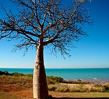 Boab Tree - Town Beach, Broome by Renee Hubbard Fine Art Photography