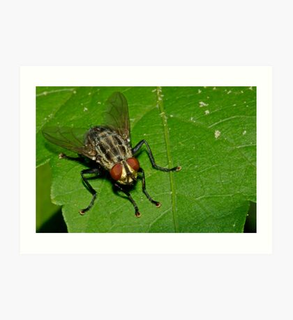 March Fly Art Print