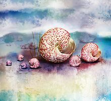 sea shells by © Cassidy (Karin) Taylor