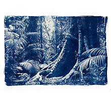 Penda trees, Kuranda rainforest Photographic Print
