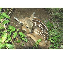 Little Fawn Photographic Print