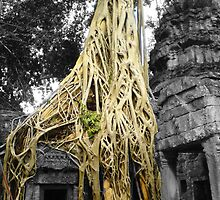 "Jungle Temple ""Siem Reap"" by hadstr"