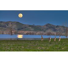 Roos in the Moonlight - part 2 Photographic Print