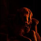 Dog in Shadow by BBatten
