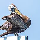 Brown Pelican by Janice Carter