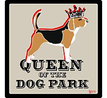 Beagle Queen of the Dog Park  Photographic Print