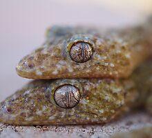 Broad Tailed Gecko Australia by Steve Bullock