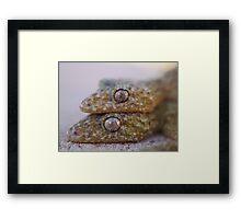 Broad Tailed Gecko Australia Framed Print