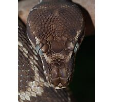 Rough Scaled Python Photographic Print