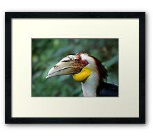 Hornbill Headshot Framed Print