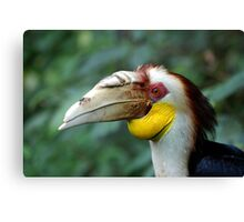 Hornbill Headshot Canvas Print