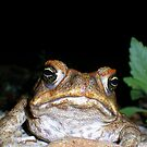"""toadally"" bored by Jodie Carruthers"