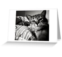 { Boo the cat } Greeting Card