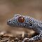 Golden Tailed Gecko Macro by Steve Bullock