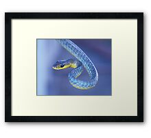 Blue - Green Tree Snake Framed Print