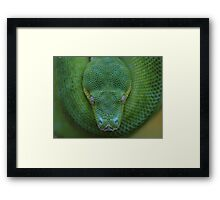 Peace - Green Tree Python Framed Print