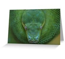 Peace - Green Tree Python Greeting Card