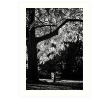 Monochrome Bench Under the Tree Art Print
