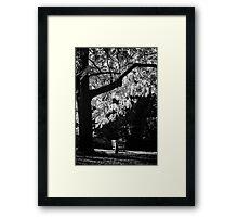 Monochrome Bench Under the Tree Framed Print