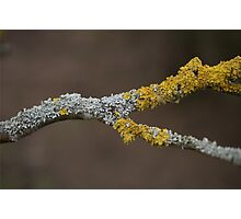 Lichens Photographic Print