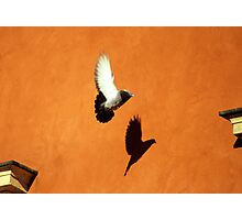 Casting Shadows in Flight Photographic Print
