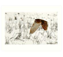Barn Owl on the Prowl Art Print