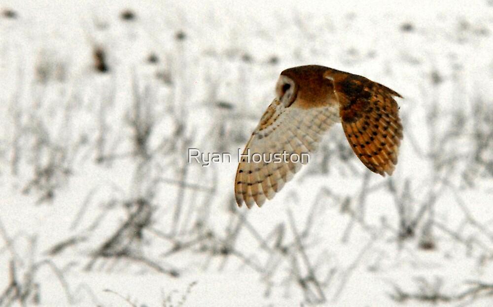Barn Owl on the Prowl by Ryan Houston