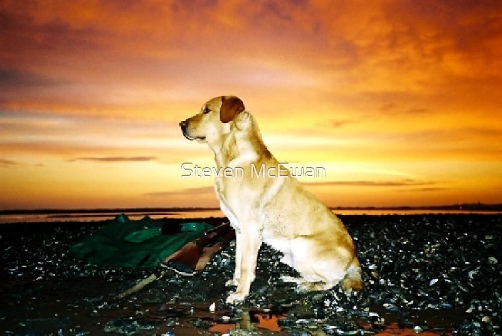 The King of Dogs by Steven McEwan