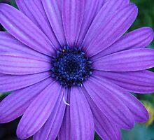 Purple days #2 by Albert1000