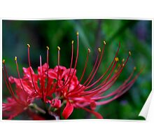 Red Spider Lily 2 Poster