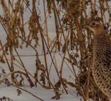 Hen Ring-necked Pheasant Sticker