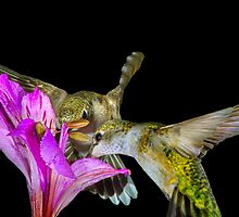 Two for Nectar by Janice Carter