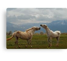 Playful Canvas Print