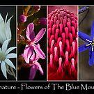 Fabulous Flowers by Ben Shaw