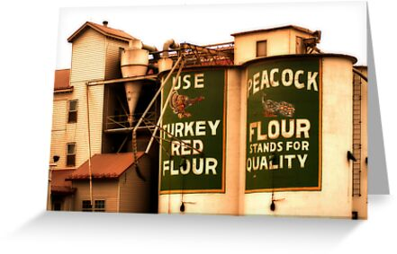 Peacock Flour by Ryan Houston