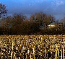 Storm & Sun... by Wim Conix