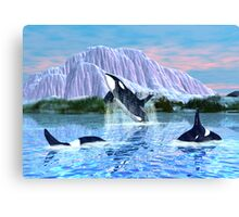 Killer Whales Canvas Print