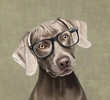 Mr Weimaraner by Sparafuori