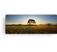 Morning on narcissus field 2 Canvas Print