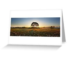 Morning on narcissus field 2 Greeting Card