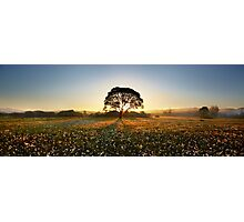 Morning on narcissus field 2 Photographic Print