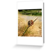 Reed Seed Greeting Card