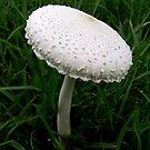 Mushroom by Bami