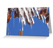colorado's winter colors WINNER Greeting Card