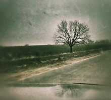 Drive by tree... by Shellibean1162