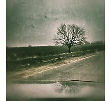 Drive by tree... Photographic Print