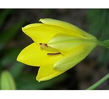 Yellow Display Photographic Print