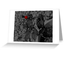 blood berry Greeting Card
